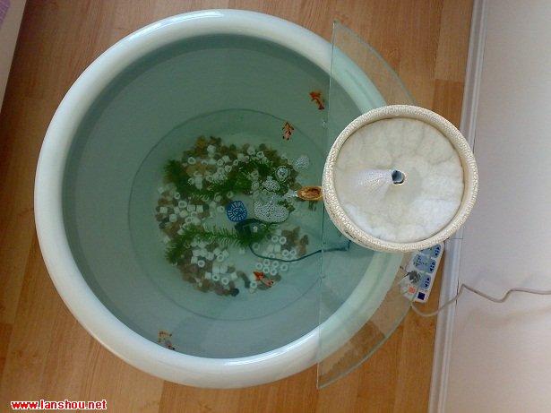 刚开始养鱼,没与经验。家用养荷花的瓷缸一个,由于是北方冬天就拿到 屋里面养鱼了~ N73 手机拍的,效果差点。 材料:瓷缸一个 直径550MM 高度420MM 花盆一个 工具!@#%)&*~#? 特点是: 1. 无多余外挂,就一根潜水泵电源线在外面。 2.花盆式上虑,内分几层,5层生化棉+磁环+麦饭石 最上面一圈准备养绿萝,放些石子就行, 潜水泵出口管从玻璃板穿过,直到花盆上部。 出口管外面是个溢水管,高度低于花盆边缘1厘米。 3.