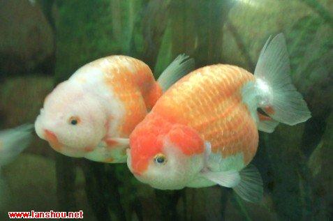 一个字.累!家里的小动物园中国