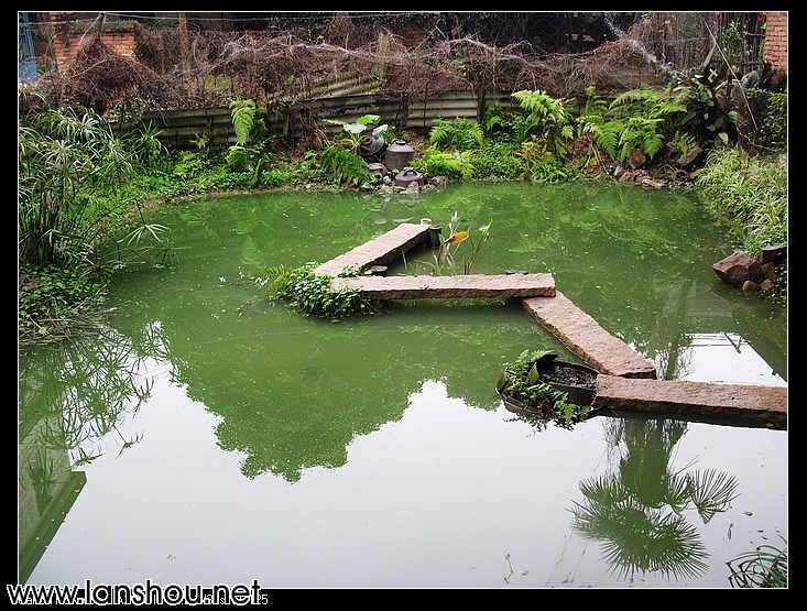 别墅后院鱼池图片