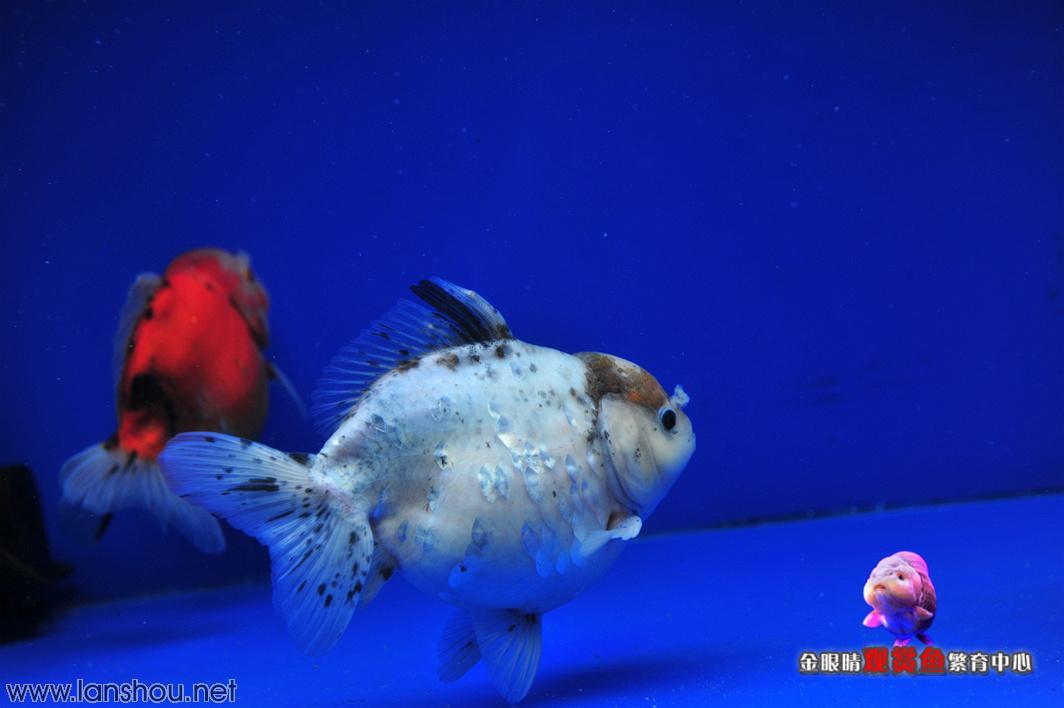 壁纸 海底 海底世界 海洋馆 水族馆 1064_708