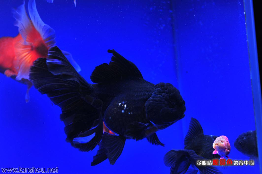 壁纸 动物 海底 海底世界 海洋馆 水族馆 鱼 鱼类 1064_708